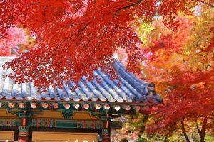 Ngược dòng thời gian về với cố đô Gyeongju Hàn Quốc mùa thu này