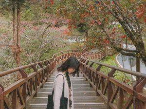 Taichung – Alishan – Qingjing Farm: Chuyến khám phá Đài Loan bất ngờ và đầy cảm xúc
