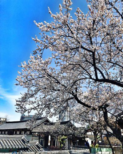 Review Hàn Quốc mùa xuân | Đi tour chẳng hề nhàm chán